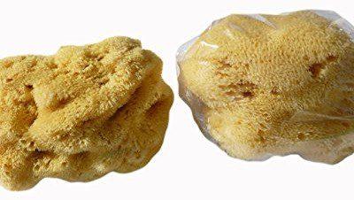 Croll & Denecke crollius + denecke naturalny gąbką levantiner L100